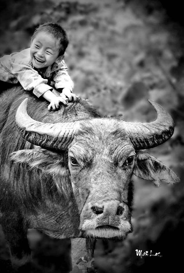 A waterbuffalo boy
